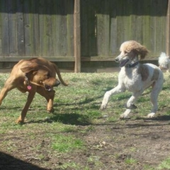 Atlas and Shandi Play