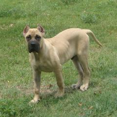 Big Puppy Rocky