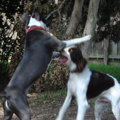 Daisy and William Play