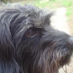 Maggie Mae in Profile