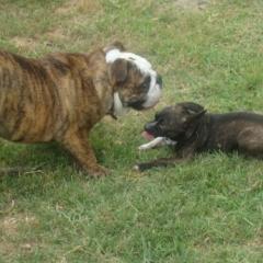Pocho and Mojo