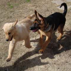 Scarlet and Gigi Play