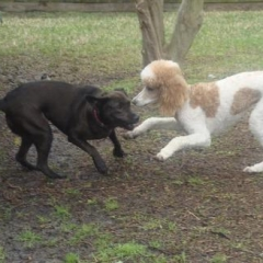 Shandi Air Play Bows to Scarlett