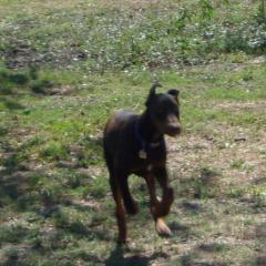 Zeus Runs