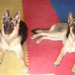 Missy and Heidi