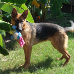 Rocky with Toy