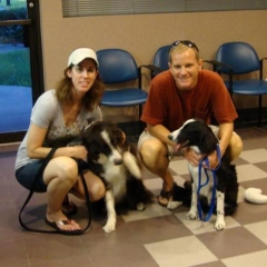 Border Collies Graduate
