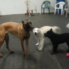 Sophie Plays with Stormie and Taz