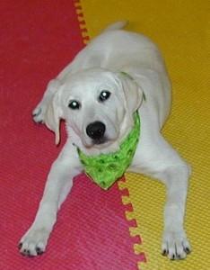 Dog Boarding School