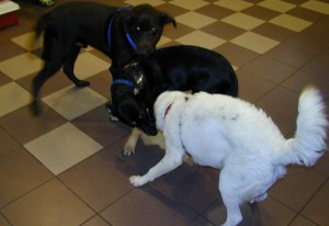 Sophie, middle, plays with Hershey and Ringo