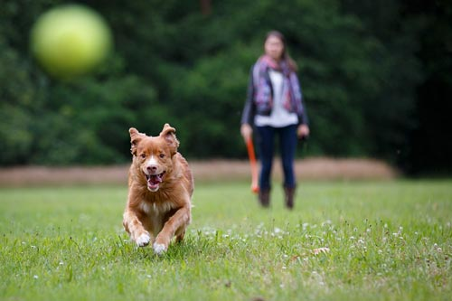 Dog-Chases-Ball-Small