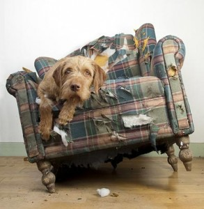 Dog-in-Destroyed-Chair-Smal