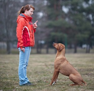 Obedient Ridgeback Small